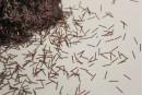 Блиск бордовий Нитка 039 добавка до рідких шпалер Макс-Колор. Купити гліттери (блискітки) для декорування інтер'єру. Відмінна якість. Усе в наявності. Швидка доставка по Україні. Доступні ціни.